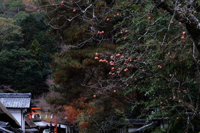 嵐山 紅葉2018_f0021869_15551016.jpg