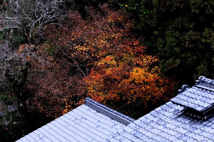 嵐山 紅葉2018_f0021869_16150974.jpg