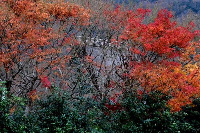 嵐山 紅葉2018_f0021869_16165237.jpg