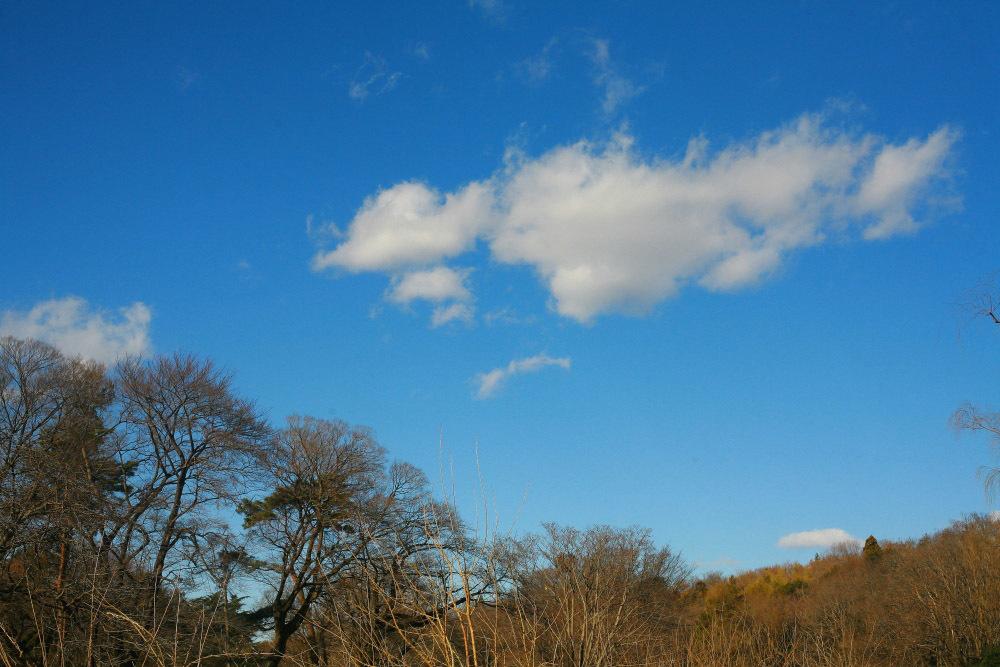 新春 初撮り その2 野川公園の柳_e0165983_11465869.jpg