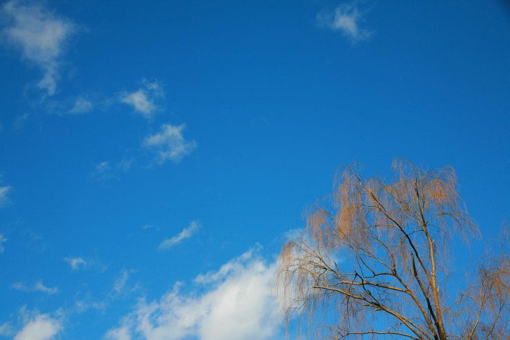 新春 初撮り その2 野川公園の柳_e0165983_11470755.jpg