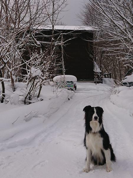 雪の白馬旅行①_d0224111_21495367.jpg