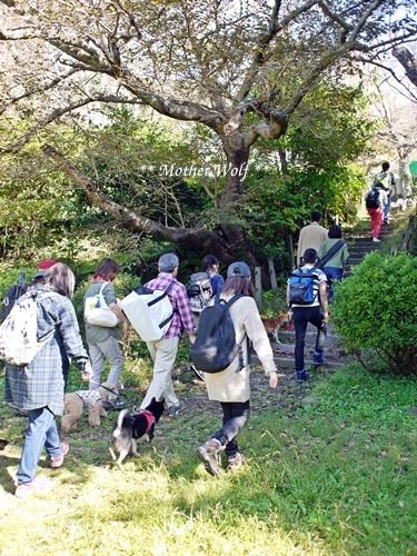第25回マザーウルフ遠足 鎌倉源氏山レポート_e0191026_17214948.jpg