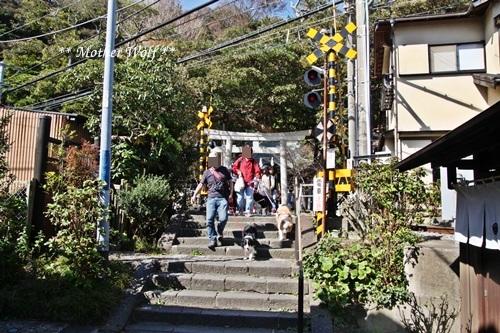 第25回マザーウルフ遠足 鎌倉源氏山レポート_e0191026_23140195.jpg