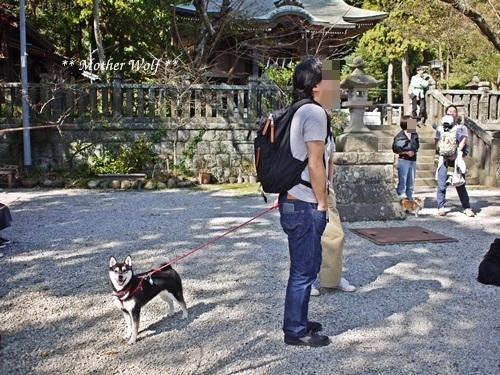 第25回マザーウルフ遠足 鎌倉源氏山レポート_e0191026_23190317.jpg