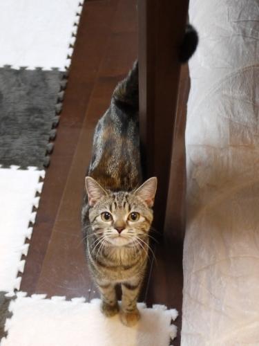 猫のお留守番 モルディブちゃん編。_a0143140_23272662.jpg