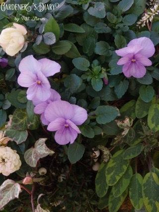 Potting soil recipe for hanging flower basket._e0365614_20402917.jpg
