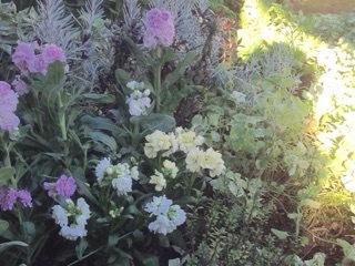 Potting soil recipe for hanging flower basket._e0365614_21470678.jpg