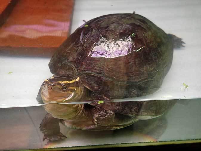 市川市動植物園~自然博物館の生物たち_b0355317_21515113.jpg
