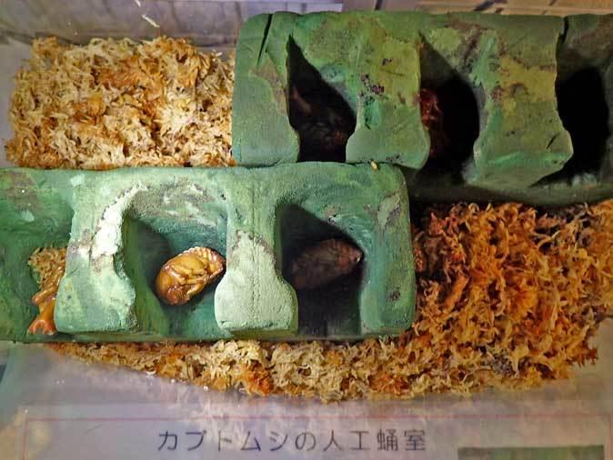 市川市動植物園~自然博物館の生物たち_b0355317_21595943.jpg