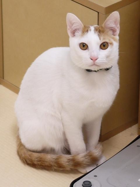 猫のお留守番 猫吉くん編。_a0143140_18361986.jpg