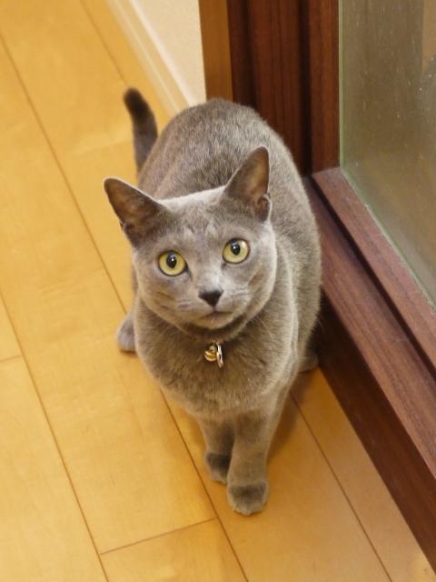 猫のお留守番 ビビちゃん編。_a0143140_18472193.jpg