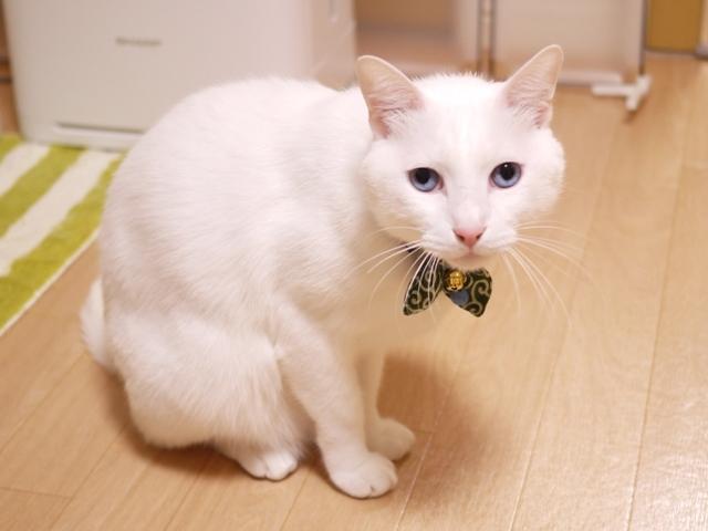 猫のお留守番 蒼也くん編。_a0143140_19042636.jpg