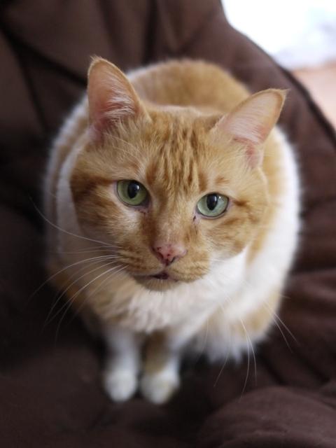 猫のお留守番 喜助くん編。_a0143140_19094996.jpg