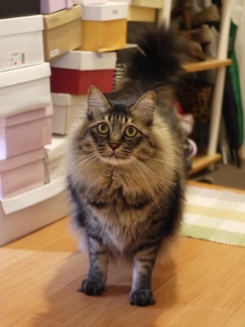 猫のお留守番 諭吉くん編。_a0143140_19114114.jpg