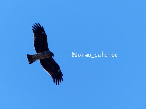 年末年始の鳥見など_d0154140_19305232.jpg
