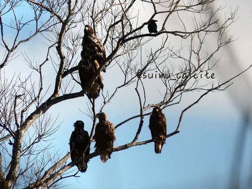 年末年始の鳥見など_d0154140_19312162.jpg