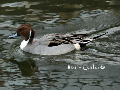 年末年始の鳥見など_d0154140_19324735.jpg