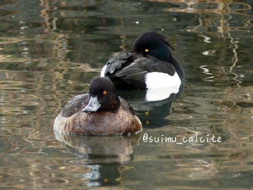 年末年始の鳥見など_d0154140_19334386.jpg