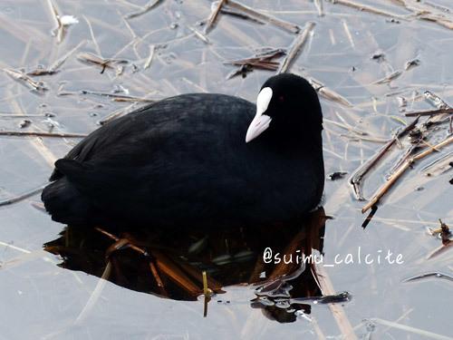 年末年始の鳥見など_d0154140_19345702.jpg