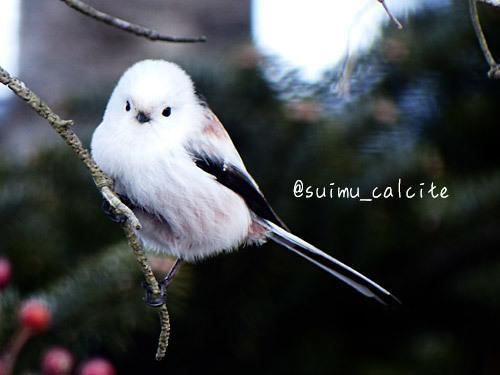 年末年始の鳥見など_d0154140_19355674.jpg