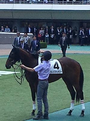 2018年度JRA賞発表、牝馬史上初の満票で年度代表馬はアーモンドアイ_b0015386_22332610.jpg