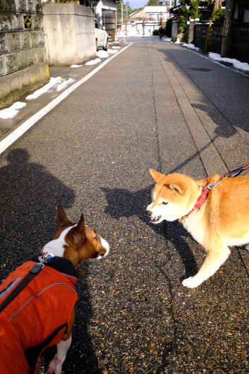富山のお姉ちゃん_b0310424_15552716.jpg