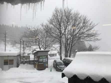1月9日(水)雪降ってまーす!_f0101226_09294365.jpeg