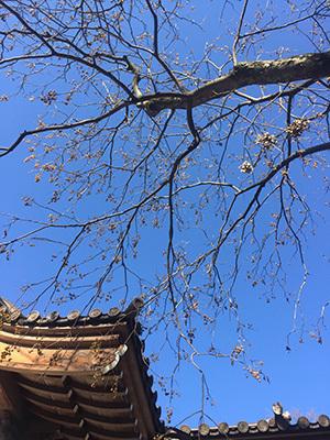 新年のご挨拶と深大寺での初詣_f0170331_13472647.jpg