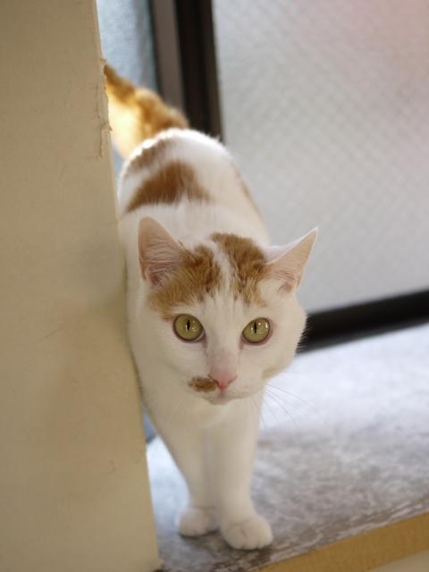 猫のお留守番 にゃーちゃん編。_a0143140_22584437.jpg