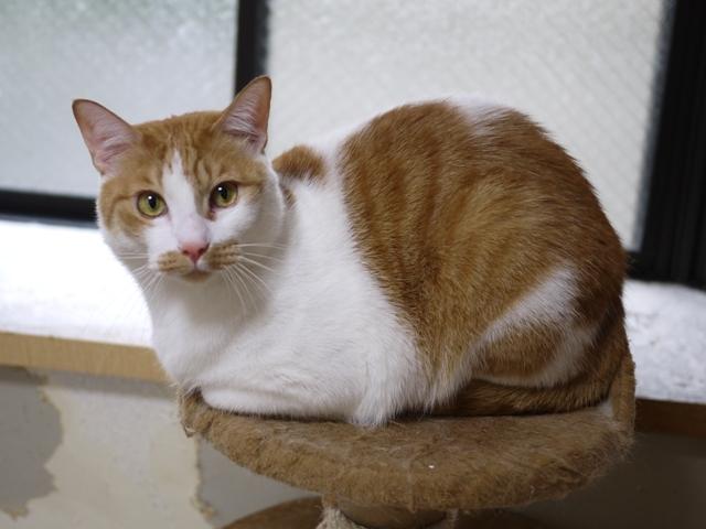 猫のお留守番 さんくん編。_a0143140_23085419.jpg