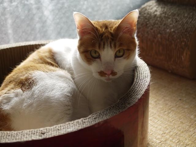 猫のお留守番 いーくん編。_a0143140_23260684.jpg