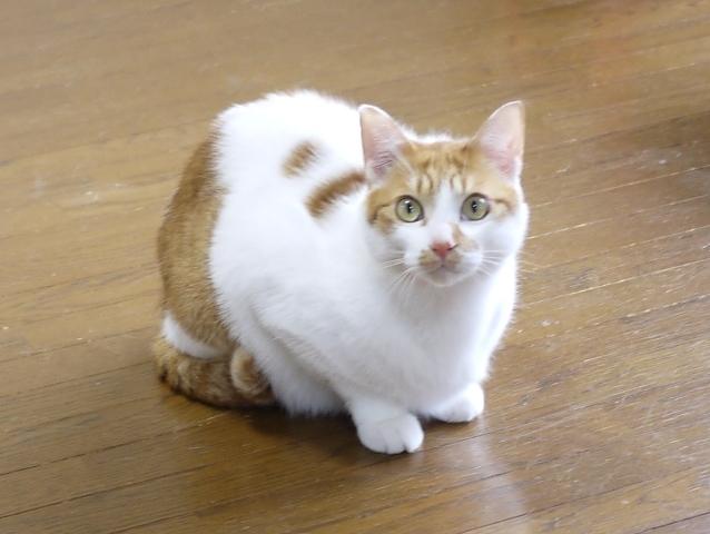 猫のお留守番 りゃんくん編。_a0143140_23283920.jpg