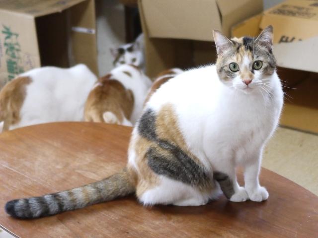 猫のお留守番 みーちゃん編。_a0143140_23325328.jpg