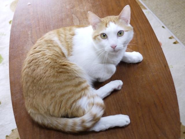 猫のお留守番 アイドルくん編。_a0143140_23395083.jpg