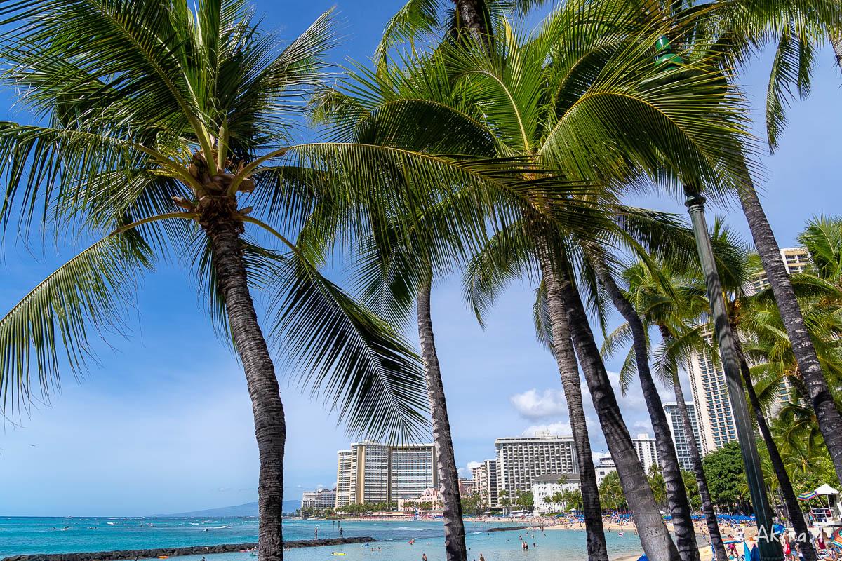 ハワイ -9-_f0152550_22541330.jpg