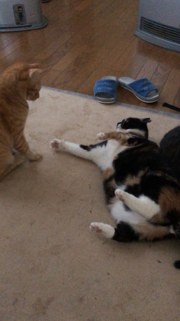 猫セーター_e0355177_19592796.jpg