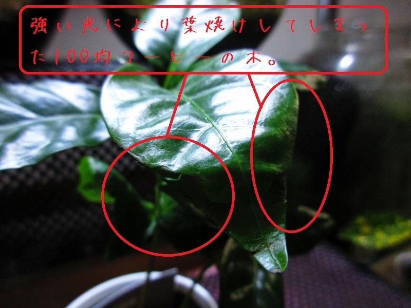 b0362459_00132233.jpg