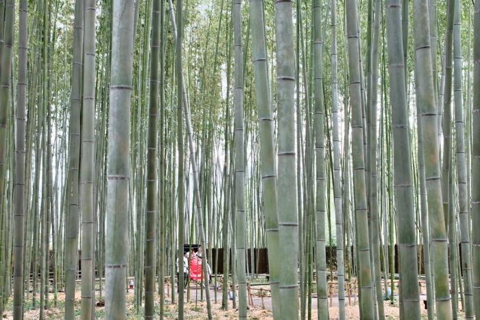 嵐山 紅葉2018_f0021869_22161545.jpg