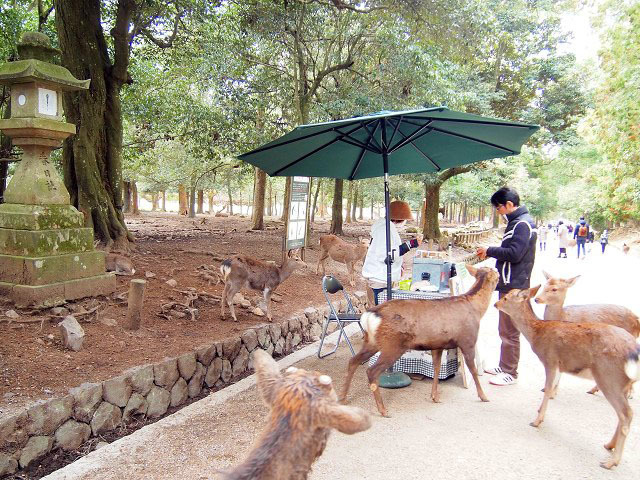 神鹿に_d0295818_22533513.jpg