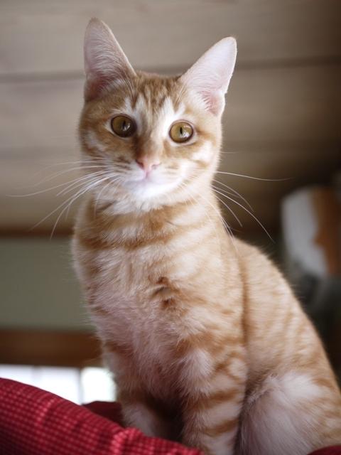 猫のお留守番 ぼぶくん編。_a0143140_20503658.jpg