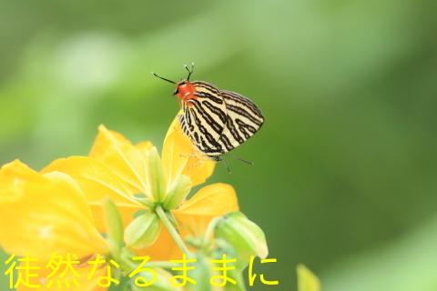 12月30日 PM 蝶探索  in ランカウイ島_d0285540_06481871.jpg