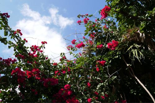 海界の村を歩く 東シナ海 伊江島_d0147406_19305582.jpg