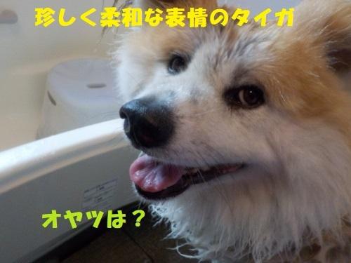 f0121712_22443732.jpg