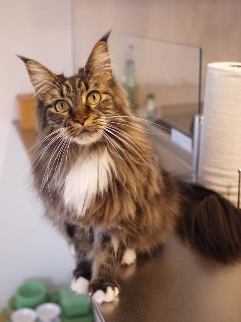 猫のお留守番 紙音ちゃん編。_a0143140_21204922.jpg