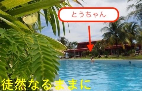 Hotel The Ocean Residence Langkawiの蝶たち_d0285540_19292113.jpg