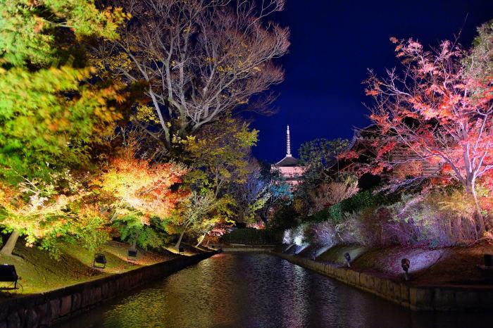 東寺ライトアップ 紅葉2018_f0021869_15211081.jpg