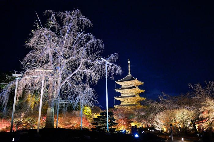 東寺ライトアップ 紅葉2018_f0021869_15211168.jpg