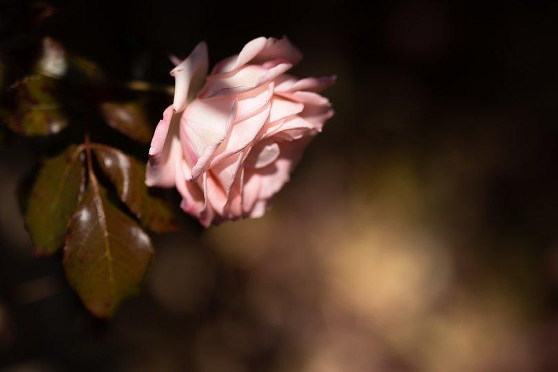 ランプと薔薇の喫茶店_d0353489_22560932.jpg