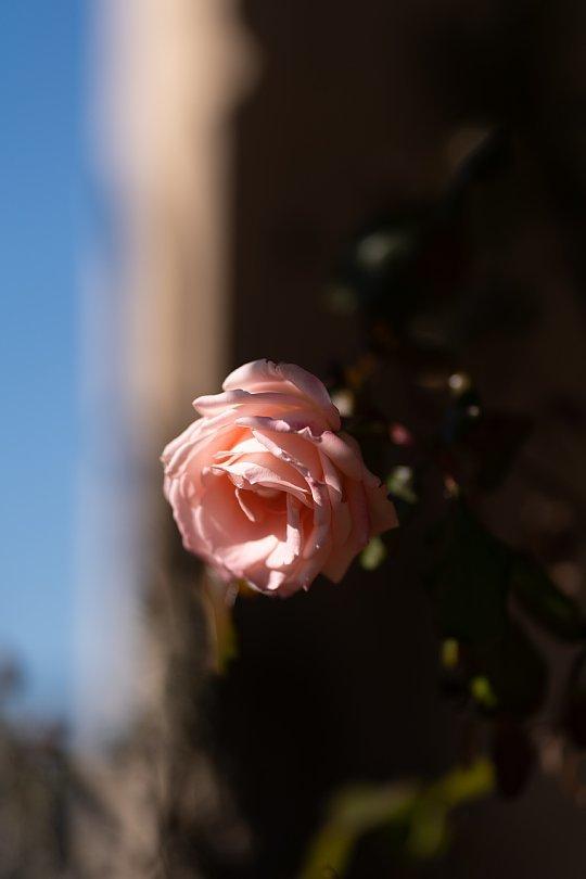 ランプと薔薇の喫茶店_d0353489_22561921.jpg